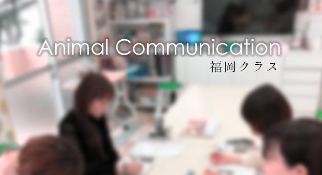アニマルコミュニケーション講座 福岡、九州